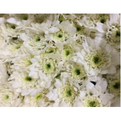 ดอกมัมสวยทนอยู่นานใช้มากในพวงหรีดต่างๆ เช่น พวงหรีดดอกไม้สด